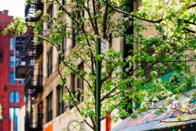 new-york4-216x144.jpg