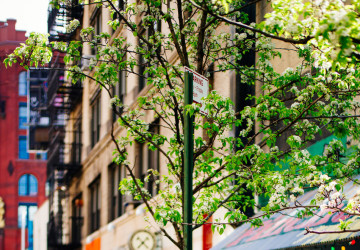 new-york4-360x250.jpg